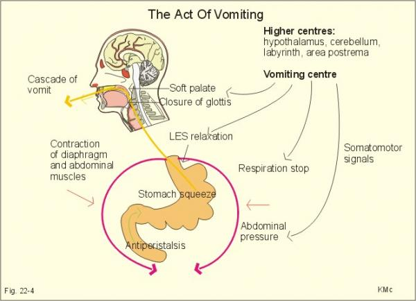 The Act of Vomiting