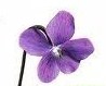 violet flower's picture